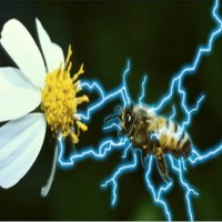 Chi Energy &#038; The Electric Communication of Humans and Bees&#8221;